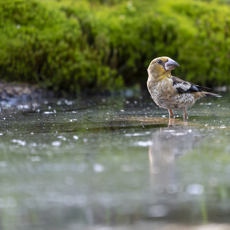 <strong>~Appelvink~</strong>