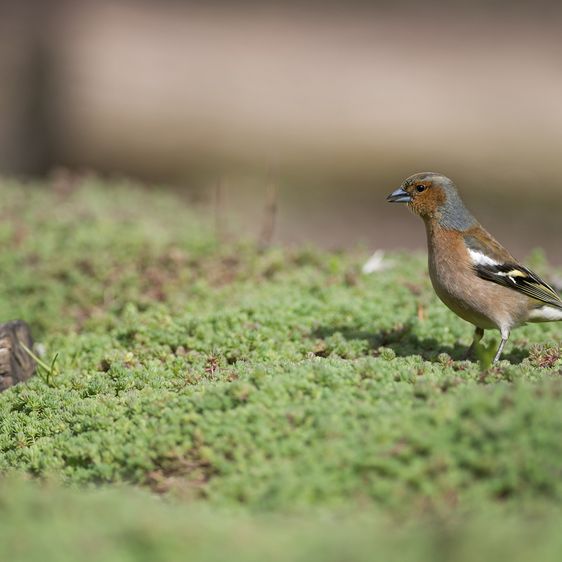 <strong>~Vink~</strong>